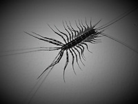 Creepy Crawler on the Ceiling Above My Bed. Snapshot taken with a Leica D-Lux 5 (ISO 100, 19.2 mm, f/3.3, 1/125 sec)