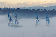 The tops of cranes poke through the fog at sunrise at the Port of Tacoma on the Puget Sound in Washington State.(Photo/John Froschauer)