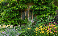 Alstroemeria and Nepeta in a border in front of a leaded window at Cothay Manor, Greenham, Wellington, Somerset, UK