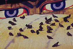 Asia, Nepal, Kathmandu. Watchful eyes of Buddha gaze from Bodhnath Stupa (circa 14th c)., with pigeons.