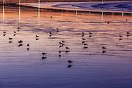 Seagulls at the beach of Essaouira, Morocco.