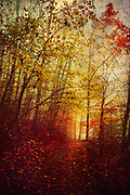 Forest path covered in fall foliage