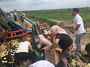 BINZHOU, CHINA - AUGUST 25: (CHINA OUT) <br /> <br /> People living in nearby villages loot chicks after a truck carrying tens of thousands of chicks, which are worth 50,000 yuan (7,800 USD), rolled over on Rongcheng-Wuhai Highway on August 25, 2015 in Binzhou, Shandong Province of China.<br /> ©Exclusivepix Media