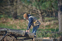 Bjorn cutting up a fallen tree. Image taken with a Nikon D5 camera and 600 mm f/4 VR telephoto lens.