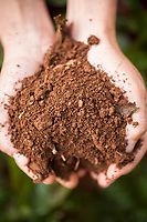 Image of hands holding healthy organic soil.