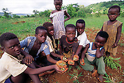 Vendan children show off their haul of grasshoppers which one of their mothers cooks and serves with porridge. The children disagree on their preference of insects or meat, but all agree that the grasshoppers, as well as mopane worms, winged termites, and locusts, are adequate and enjoyable when no meat is available. Masetoni, Mpumalanga, South Africa. (Man Eating Bugs page 137 Top)