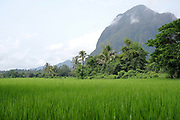 Ricefields and landscape in Sisa'ath village in the Laos province of Vientiane. Over the past decade a paved road and electricity have improved life for the village's 50 families. But alongside this welcome progress climate change has brought unprecedented and unpredictable new weather patterns, disrupting harvests and lifestyles in the farming-dependent community.