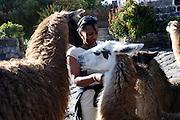 Ecuador, May 25 2010: Lorna feeds the llamas at Hacienda San Agustin del Callo. Copyright 2010 Peter Horrell