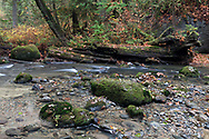 A nurse log along the North Fork of Kanaka Creek at Kanaka Creek Regional Park in Maple Ridge, British Columbia, Canada.