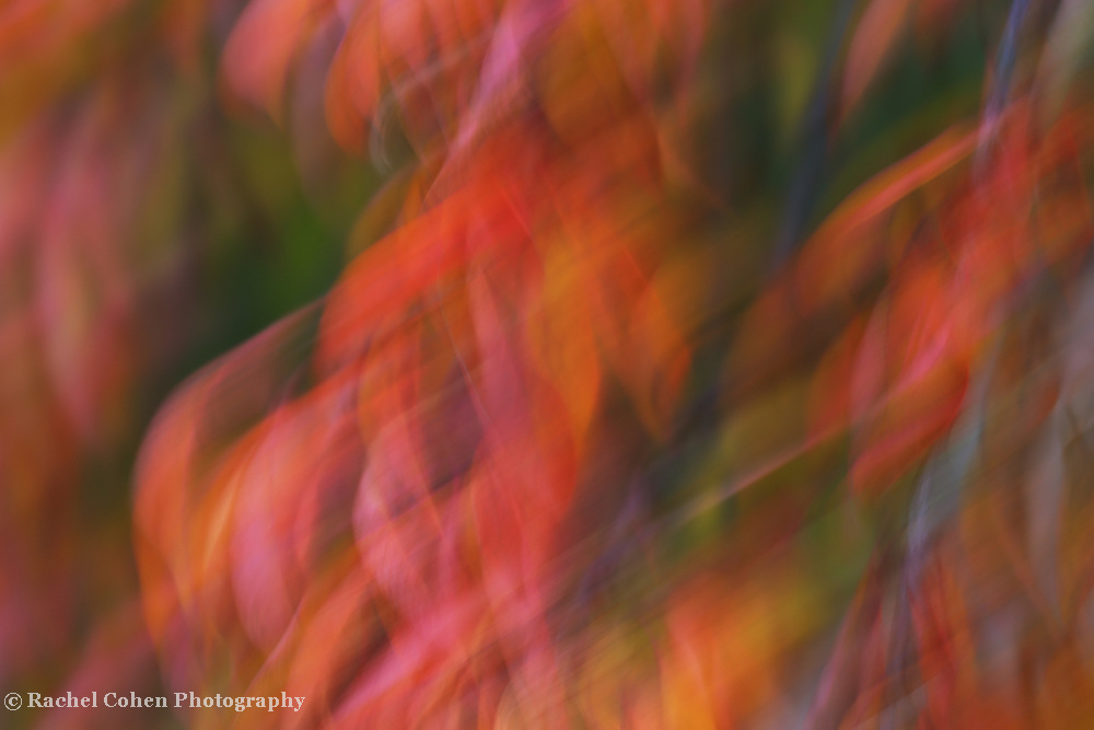 """""""Emotion in Color""""<br /> <br /> Flowing abstract artwork in a rainbow of colors!"""