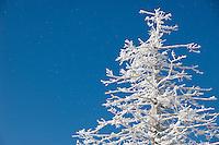 Bluebird Day.  Gunstock Mountain Resort Gilford, NH.  (Karen Bobotas/Photographer)