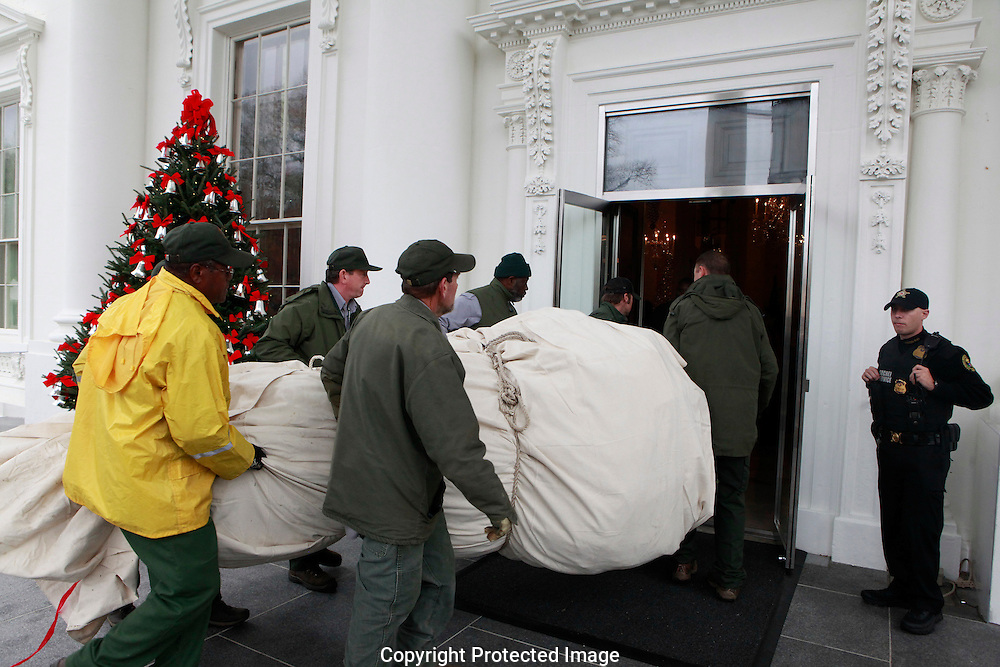 One more Christmas tree is brought into the White House as part of the Christmas decorations at the White House  in December 2016<br /> <br /> Photo by Dennis Brack