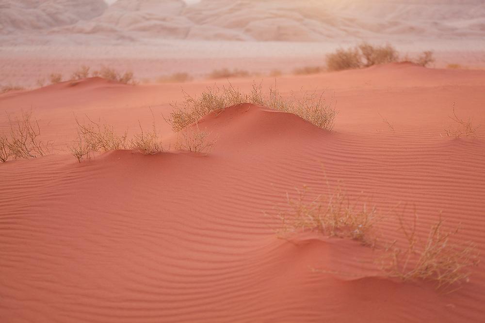 Windswept ripples in small red sand dunes in Wadi Rum, Jordan.