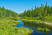 Dead Water Brook, Near St. Stephen, New Brunswick, Canada