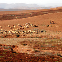 North Africa, Africa, Morocco.  Nomadic herders and a flock of sheep roam the vast Moroccan landscape in the foothills of the Atlas Mountains.