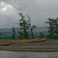Larch trees grow beside Lake Hovsgol, under the Horidal Saridag Mountains in Lake Hovsgol National Park, Mongolia.