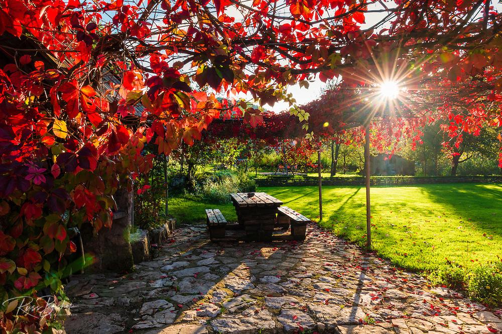 Sunlight through autumn grape vines, Korana Village, Plitvice Lakes National Park, Croatia