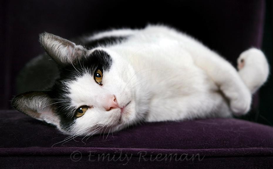 Black cat reclining on purple furniture