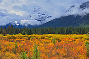Autumn colrs at Moose Meadows in the Bow Valley<br />