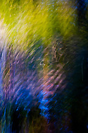 ripples on the surface of a beaver pond on the Kitsap Peninsula in Puget Sound have their motion frozen in the image in abstract reflections