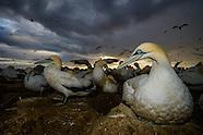Seabird Breeding Islands