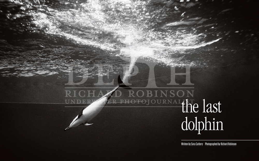 Kelly, the last dolphin held in captivity in New Zealand, was the embodiment of our changing attitudes to marine life.<br /> Shot on assignment for New Zealand Geographic Issue: 94 November – December 2018.<br /> Photograph Richard Robinson © 2008.<br /> Read the Feature: https://www.nzgeo.com/stories/the-last-dolphin/