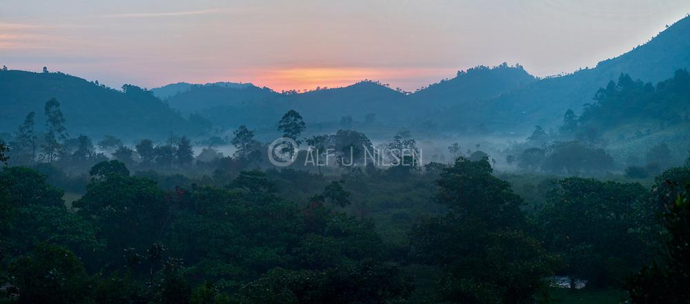 Foggy morning in Bwindi, Uganda.