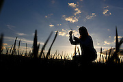 Sao Gotardo_MG, 24 de maio de 2015<br /> <br /> Fotos dos produtores de alho na regiao de sao gotardo.<br /> <br /> Foto: MARCUS DESIMONI / NITRO
