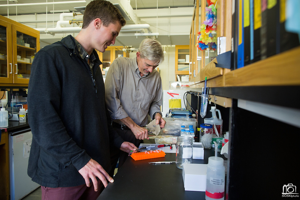 Stanford undergrad Austin Ayer, left, and Director of Hopkins Marine Station Stephen Palumbi clip a shark fin at Stanford University's Hopkins Marine Station in Pacific Grove, California, on February 23, 2016. (Stan Olszewski/SOSKIphoto for Hakai Magazine)