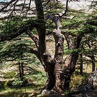 Arz ar-Rab - The Cedars