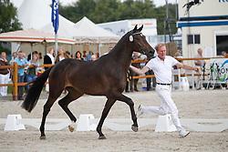 067 - Coco Donja<br /> KWPN Paardendagen Ermelo 2010<br /> © Dirk Caremans