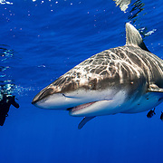 The future looks bright for sharks in The Bahamas as long as tourists keep coming and bringing their wallets.