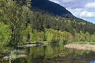 The Chilqua Slough along Sylvester Road near Mission, British Columbia, Canada