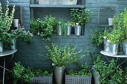 Herbs in galvanised containers by kitchen