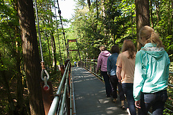 North America, United States, Washington, Bellevue, woman in Bellevue Botanical Garden, Ravine Experience suspension bridge