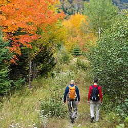 Two men walk a woods road in fall in Reddington Township, Maine. Near Crocker Mountain. High Peaks Region.