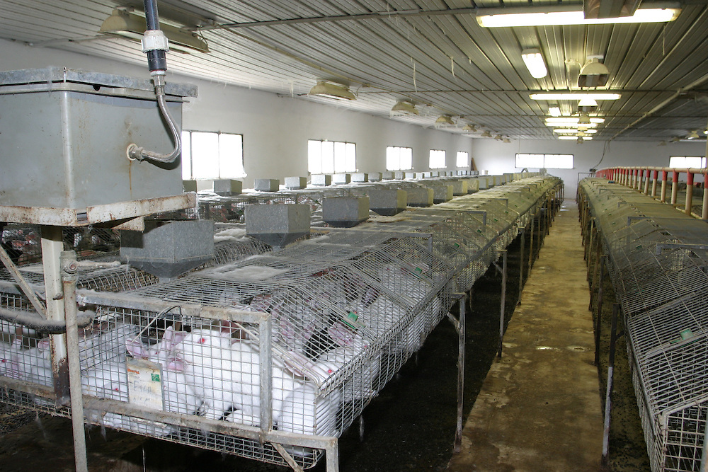 Rabbit caged on a European fur farm. Hundreds of millions of rabbits are factory farmed and slaughtered for fur and meat every year.