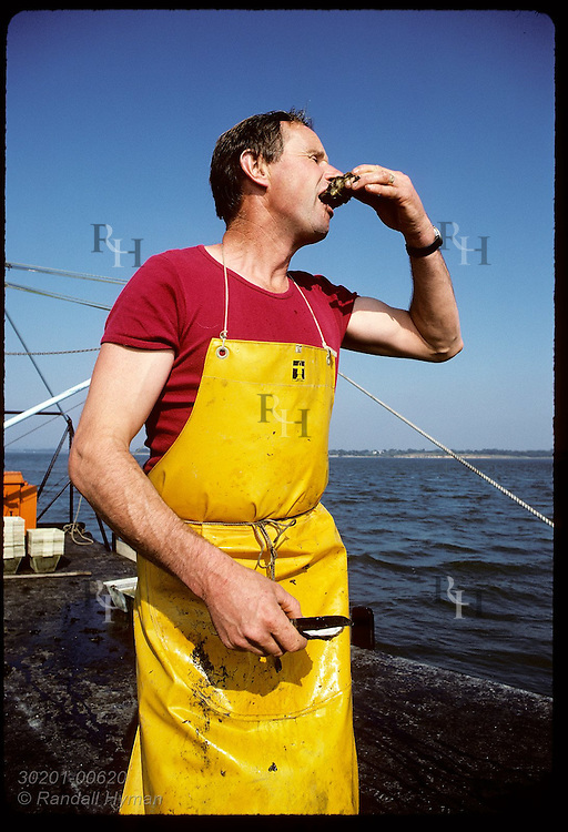 Gildas Audic savors one of the Japanese oysters he just dredged from bottom of Gulf of Morbihan. France