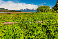 Pack Creek Brown Bear Sanctuary  on Admiralty Island, near Juneau, Alaska USA. Admiralty Island is home to the highest density of brown bears in North America.