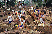 FLOODS & DEFORESTATION, Philippines. Children survivors. Communities wiped out. Thousands of people died during flash floods in Leyte, the Philippines. Heavy rains brought floodwaters into river deltas where the poorest communities live, with  access to water; shanty towns, squatter camps were rapidly washed away.  The rapidity of flooding was blamed as much on logging and deforestation as the rain storms themselves. The Philippines, as the in rest of South East Asia, is rife with corruption amongst state, government and military officials who make a profit from illegal logging concessions.