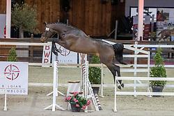 065, Salamander Dwerse Hagen<br /> BWP Hengstenkeuring 2021<br /> © Hippo Foto - Dirk Caremans<br />  12/01/2021