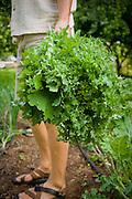 Conner harvesting kale.