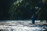 Fly fishing North Fork of the Nehalem River, Oregon.