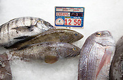 Wreckfish, also known as Stone Bass or Bass Grouper, fishmongers at Playa Blanca, Lanzarote, Canary Islands, Spain