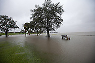 New Orleans Louisiana, August 28th, 2012,  Tree partially under water on the shore of Lake Pontchartrain.