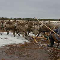 North of the Arctic Circle in Russia, Arthum Khantazeski, a nomadic Komi reindeer herder, navigates his sled across a half-melted tundra bog as he steers the herd towards its next destination.