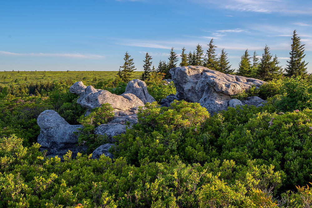 Turtle Rock lays nestled among the spring green blueberry heaths of Bear Rocks Preserve in West Virginia.