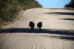NAMIBIA ETOSHA 30APR14 - XXX near Namutoni, Etosha National Park, Namibia.<br /> <br /> jre/Photo by Jiri Rezac<br /> <br /> © Jiri Rezac 2014
