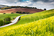 Road between spring fields