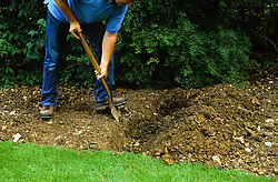 How to single dig<br /> Digging second trench, turning soil over on top of manure in first trench